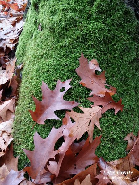listi-na-podzim