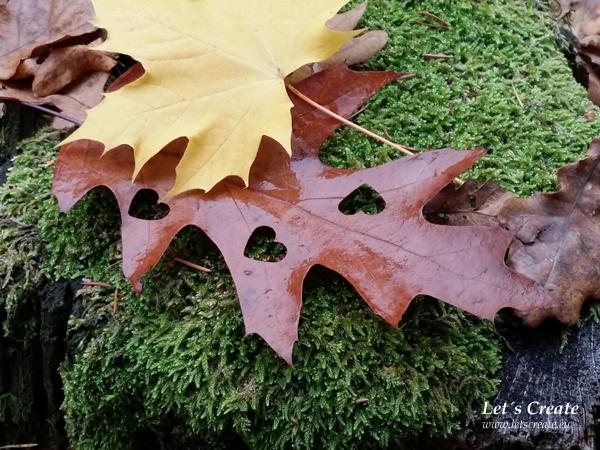 podzimni-tvoreni-priroda